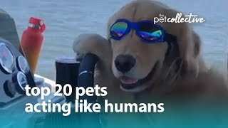 Download Best Pets of the Year: Top 20 Pets Acting Like Humans | The Pet Collective Video