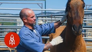 Download Training Wild Horses With Convict Cowboys Video