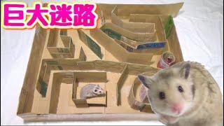 Download ダンボールだけで出来るハムスターの巨大迷路を作る!!DIY Video