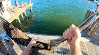 Download TAUGHT This THIEF A LESSON! Catch N Cook- Snook, Black Drum, Sheepshead (Rod n Reel Pier Fishing) Video