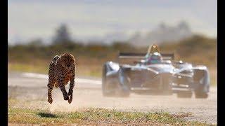 Download Drag Race: Formula E Car vs Cheetah Video
