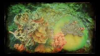 Download LOREN LEGARDA: Philippine Marine Biodiversity Documentary Video