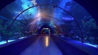 Download ANTALYA AQUARIUM / The world's biggest tunnel aquarium Video