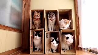Download 6つの箱と6匹の猫 Box and cat 2017#15 171107 Video