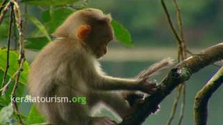Download The Very best of Wayanad, Volume 1 Video