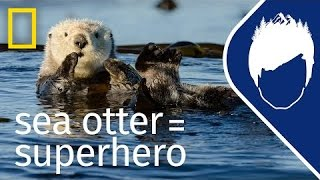 Download Sea Otters (Episode 5) | wild life with bertie gregory Video