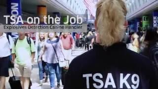 Download TSA on the Job: Explosives Detection Canine Handler Video