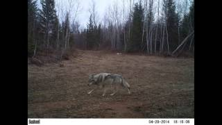 Download Trail Camera: Over a Year in the UP Video