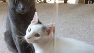 Download Kitten Close Up 2017-10-08 Video
