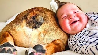 Download Funny Babies Playing With Dogs - Baby and Pet Videos [Funny Baby] Video