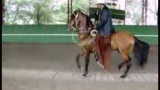 Download Dancing Horses Music Video Video