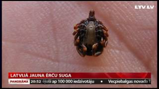 Download Latvijā jauna ērču suga Video