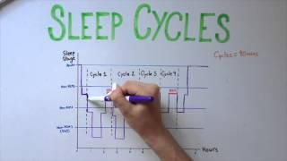 Download Sleep 5: Types of Sleep and Sleep Cycles Video