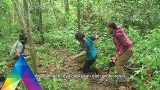 Download BERBURU - MONITORING HARIMAU SUMATERA (23/2/16) 3-3 Video