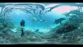 Download Dolphin encounter on the Great Barrier Reef Video