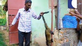 Download Vava Suresh Caught a Cute Cobra Baby & an Asian Civet   SNAKE MASTER 169 15 07 2016   Kaumudy TV Video