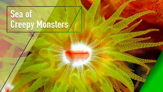 Download Sea of Creepy Monsters - The Secrets of Nature Video