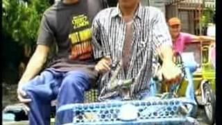 Download Wings Polio Alma5 Video