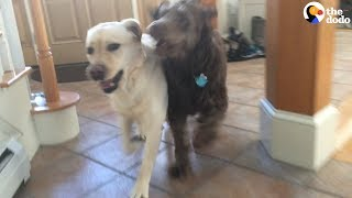 Download Dog Reunites With Best Friend | The Dodo Video