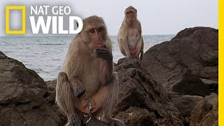 Download The Life of a Seaside Monkey | Wild Thailand Video