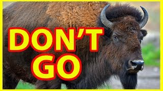 Download Why NOT to Visit Yellowstone National Park - DON'T GO !!!!!! Video
