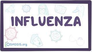 Download Influenza - causes, symptoms, diagnosis, treatment, pathology Video