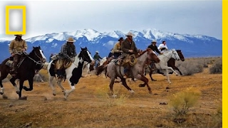 Download Chase a Wild Buffalo Stampede With These Heroic Cowboys | Short Film Showcase Video