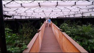 Download Best Crocodile Greenhouse Ever! Kamp Kenan S3 Episode 22 Video