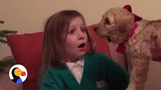 Download Little Girl Reacts to Puppy Surprise | The Dodo Video