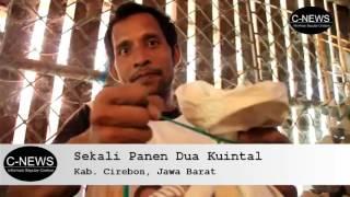 Download Omsetnya Gila!! Peternak Jangkrik Ini Sekali Panen Dua Kuintal Hanya Dengan Bibit Dua Kilogram.. Video