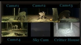 Download All Six Deer Trail Cams (Highlights) Video