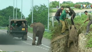 Download Saving an elephant family from a sewer Video
