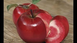 Download Types Of Fruit You NEVER Knew Existed Video
