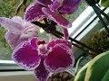 Download обзор моих цветов на улице, пенёчки орхидей Video