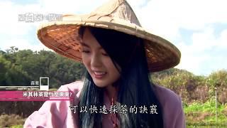 Download 【在台灣的故事】山城裡發現慢經濟 第925集 20181225 Video