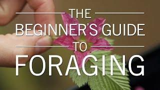 Download Original Fare - The Beginner's Guide to Foraging   Original Fare   PBS Food Video
