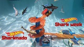 Download Hot Wheels shark week sharknado corvettes vs sport cars tournament race Video