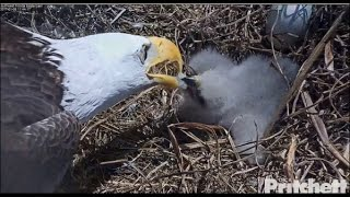 Download SWFL Eagles ~ Pantry is Full; Fish & UFO's 1.6.17 Video