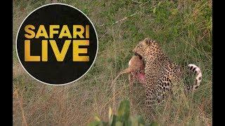Download safariLIVE - Sunrise Safari - May 16, 2018 Video