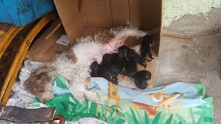 Download This image of a homeless mom and her babies was texted to Hope For Paws. Video