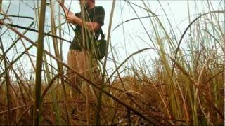 Download Everglades Invasives Video