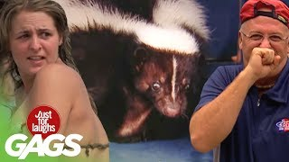Download Best Skunk Pranks - Best of Just For Laughs Gags Video