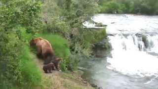 Download Katmai National Park Bears: Mother Protects Her Cubs at Brooks Falls. Video