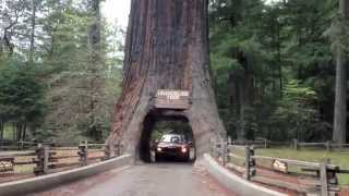 Download Driving Through 2 Huge Ancient Redwood Trees on the California Coast in a Mini Cooper Convertible Video