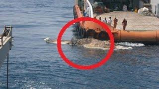 Download Bizarre Strange Sea Creature Found In Persian Gulf Video
