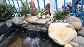 Download Hồ cá koi Nhật Bản đẹp - Hồ cá koi mini, sân thượng, trong nhà Video