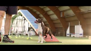 Download Dog - Agility Training – 4 Paws 2015 - Competition - Trailer Video