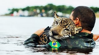 Download 10 Most Inspiring Animal Rescues Video