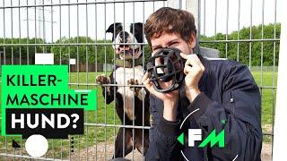 Download Leben mit Kampfhund – Monster auf vier Pfoten? Video