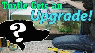 Download Setting up New and Improved Turtle Tanks! Video